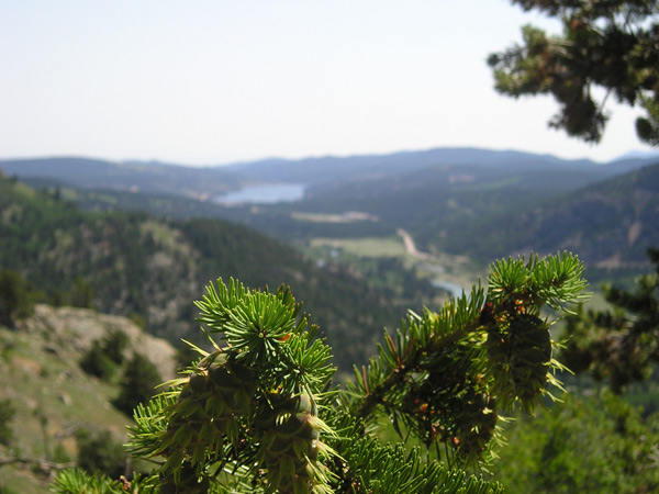 Conifer on mountain